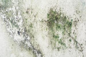 Mold Testing Pompano Beach