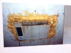 Mold Removal Companies Pompano Beach, FL